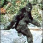 Dispatch: Bigfoot Not Impressed With Flying Dinosaurs Attacking In North Carolina